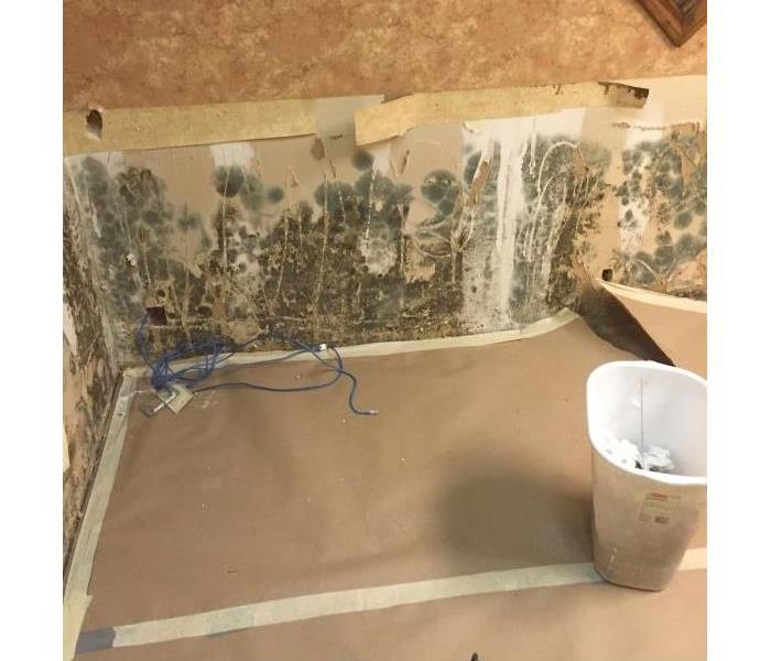 Mold Remediation in Amarillo, TX